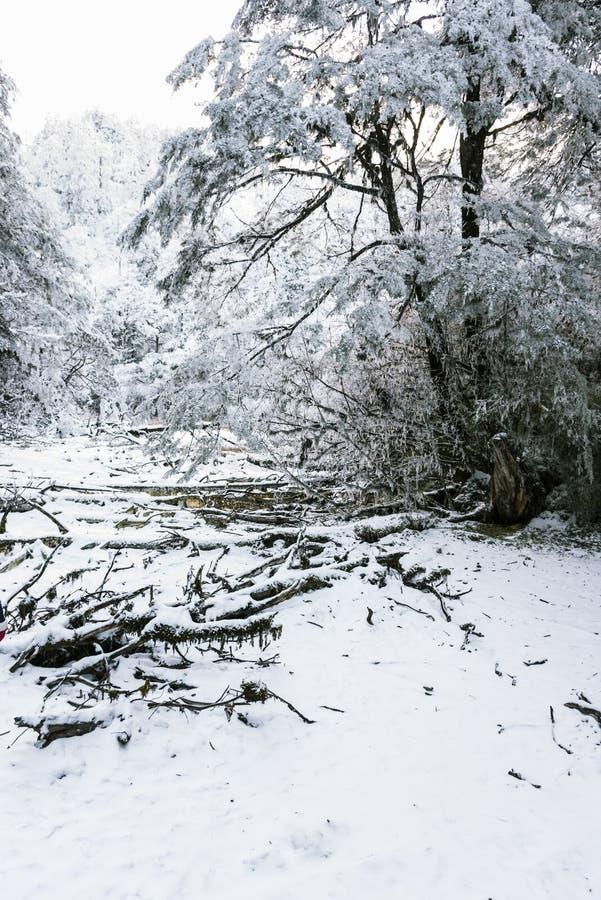 Snow Hailuogou scenery royalty free stock photos