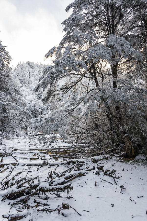 Snow Hailuogou scenery royalty free stock image