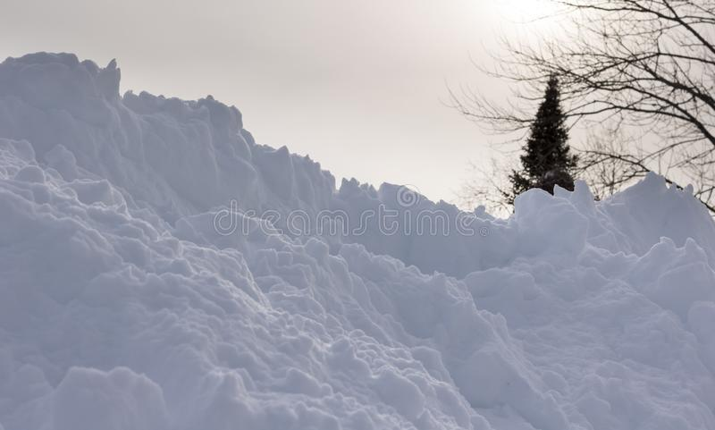 Snow with Hazy Spruce Tree and Sunlight Behind. Snow hill in front of a tall spruce tree with nice hazy sunshine casting through and down on it royalty free stock image