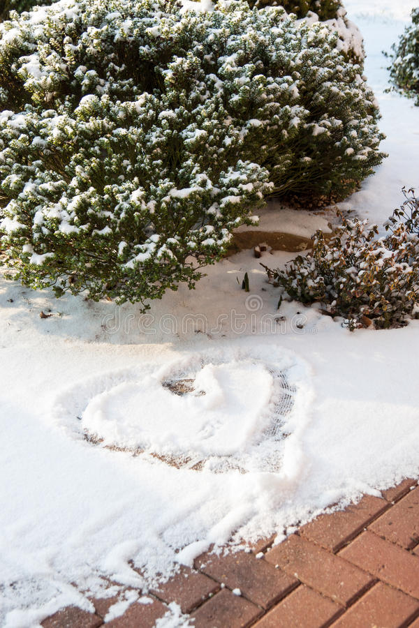 Snow heart and bush stock photography