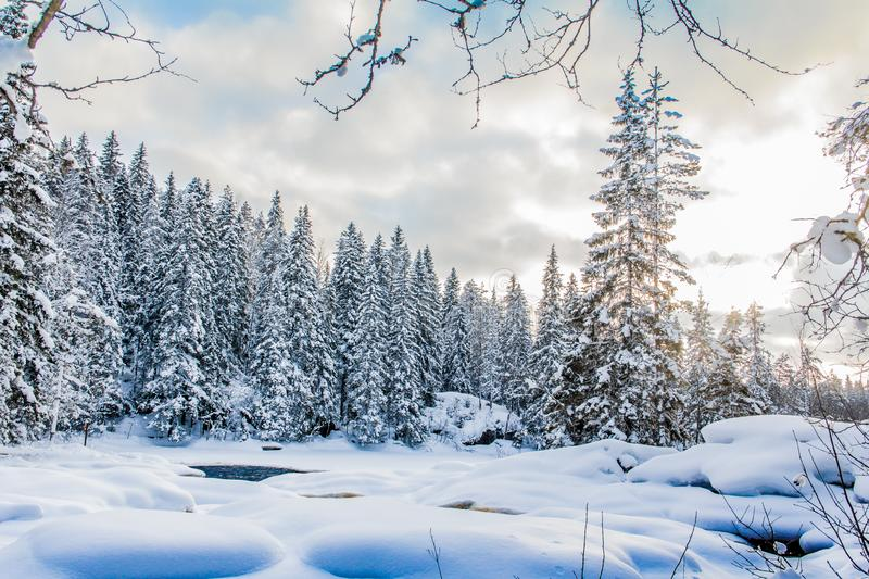 Snow and ice of beautiful Karelia. Somewhere in Russia. Forest in the snow. Beautiful time of year. Purity of nature stock photo