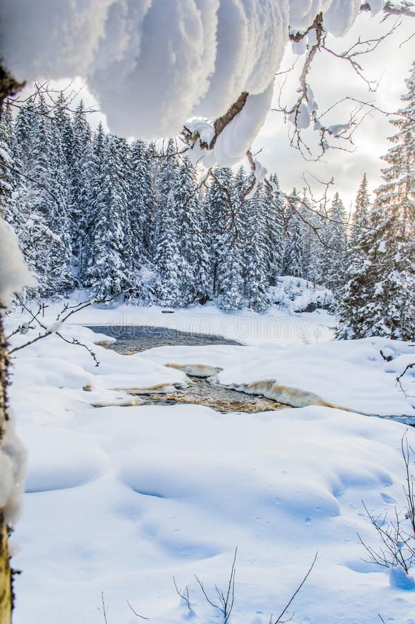 Snow and ice of beautiful Karelia. Somewhere in Russia. Forest in the snow. Beautiful time of year. Purity of nature stock photography