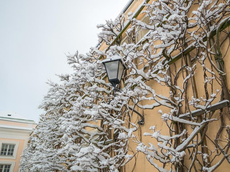 Snow on lamp in the wall winter with copy space royalty free stock images