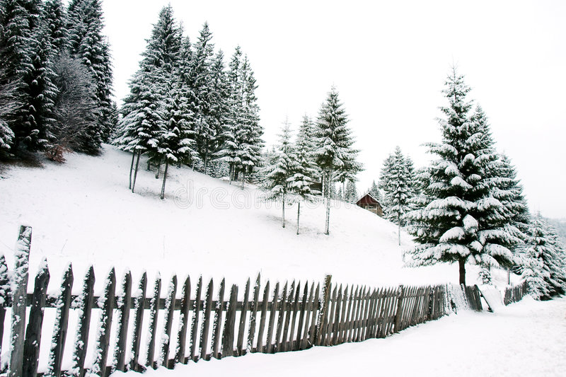 Snow landscape. Snow season landscape with evergreen trees royalty free stock image