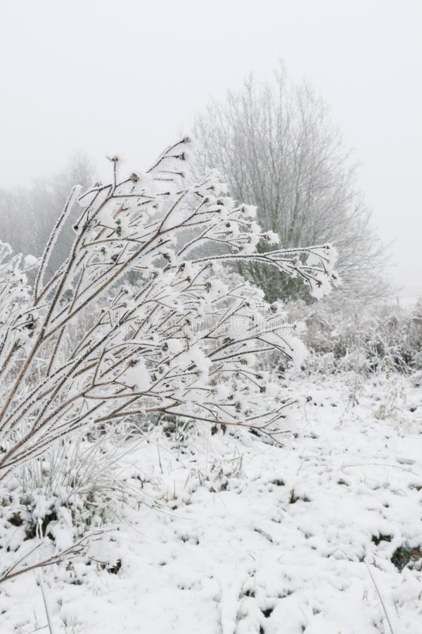 Snow landscape over-branched branches at the bush stock photos