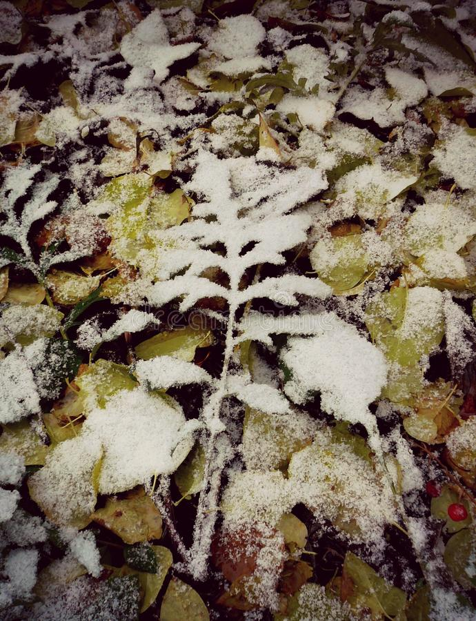 Snow. Leaf under snow, the winter begins royalty free stock photo