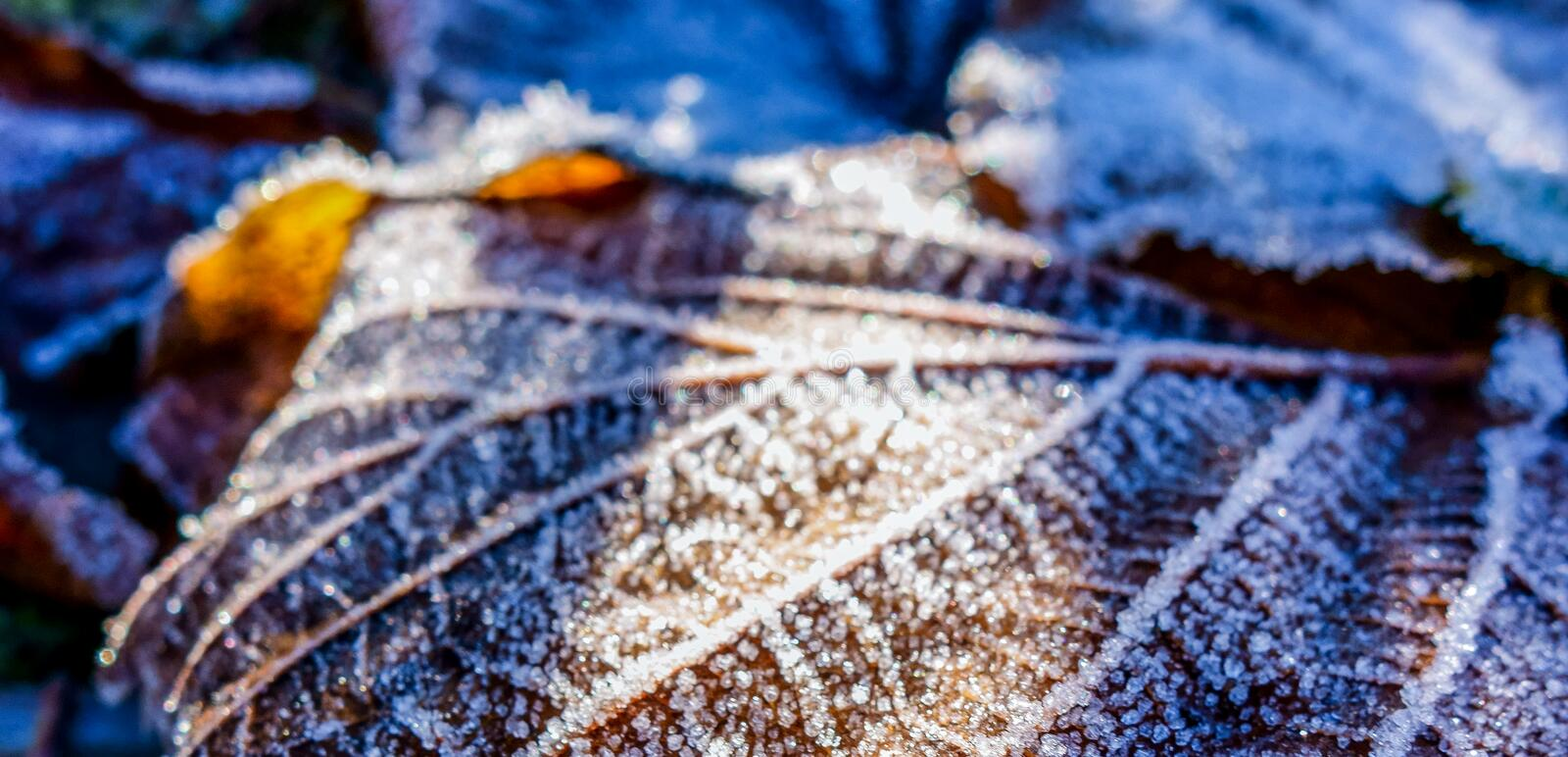 Snowy leave royalty free stock images