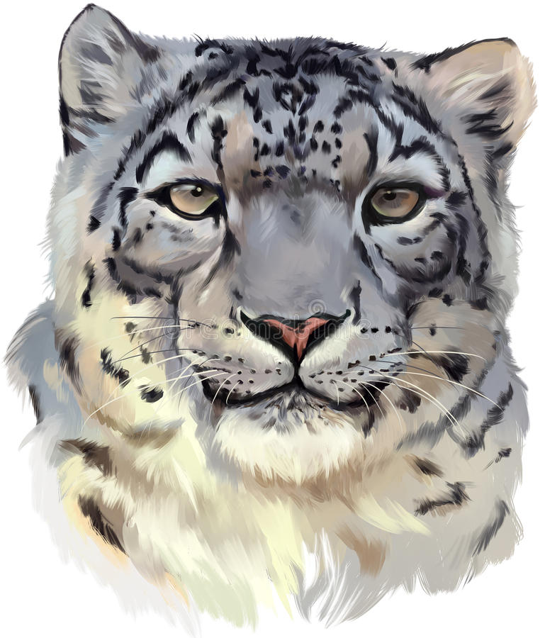 Snow leopard watercolor painting vector illustration