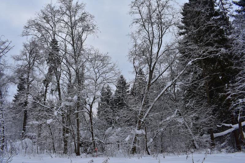 Snow makes a real fairy tale out of the ordinary world. Winter - this is the coldest time of the year. Snow makes a real fairy tale out of the ordinary world stock photo