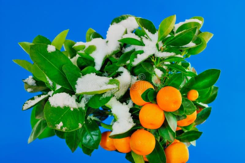 Download Snow Melts stock photo. Image of white, hill, garden, orange - 8967890