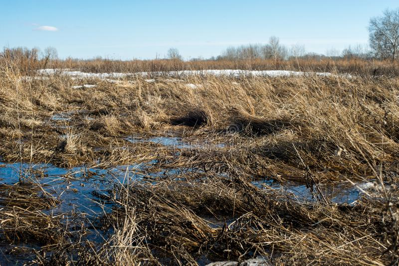 Snow melts and accumulated melt water forms a swamp. Spring, snow melts and accumulated melt water forms a swamp stock photography