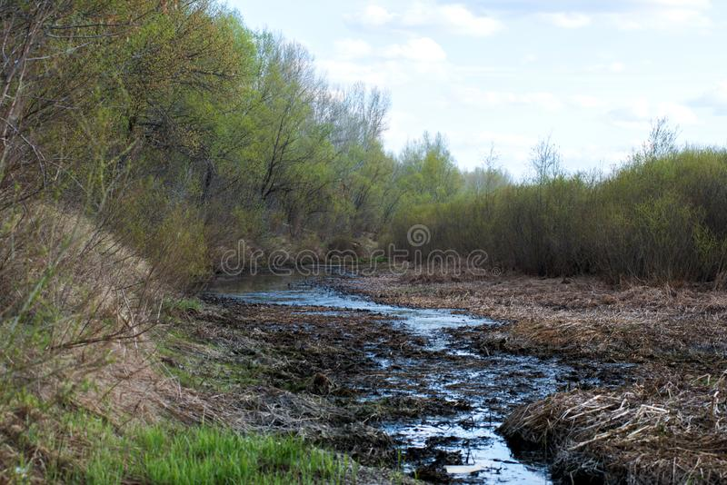 Snow melts and accumulated melt water forms a swamp. Spring, snow melts and accumulated melt water forms a swamp royalty free stock images