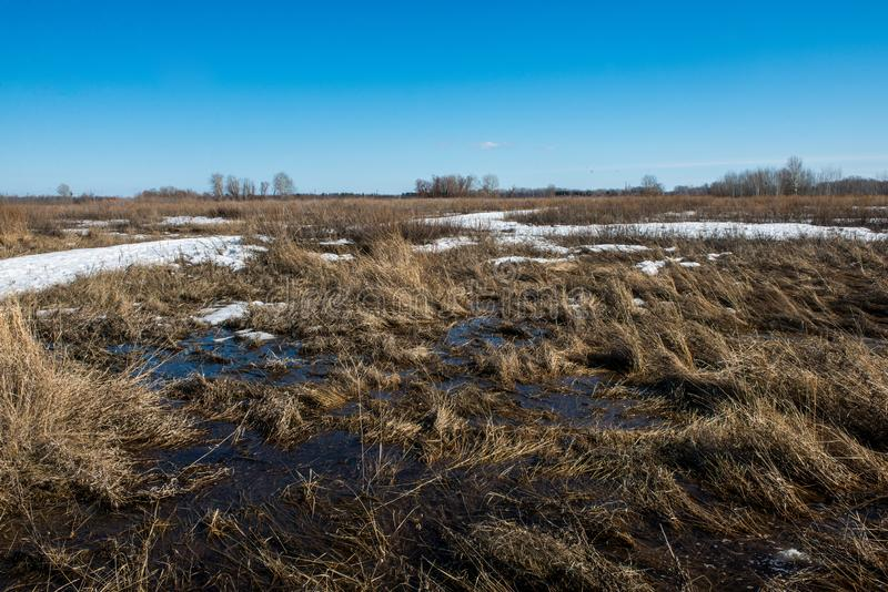 Snow melts and accumulated melt water forms a swamp. Spring, snow melts and accumulated melt water forms a swamp royalty free stock photos