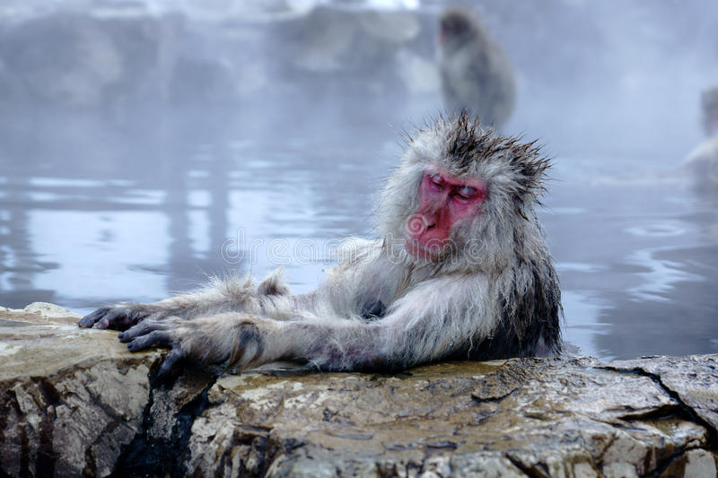 Download Snow Monkey stock photo. Image of cute, outdoor, snow - 37630900