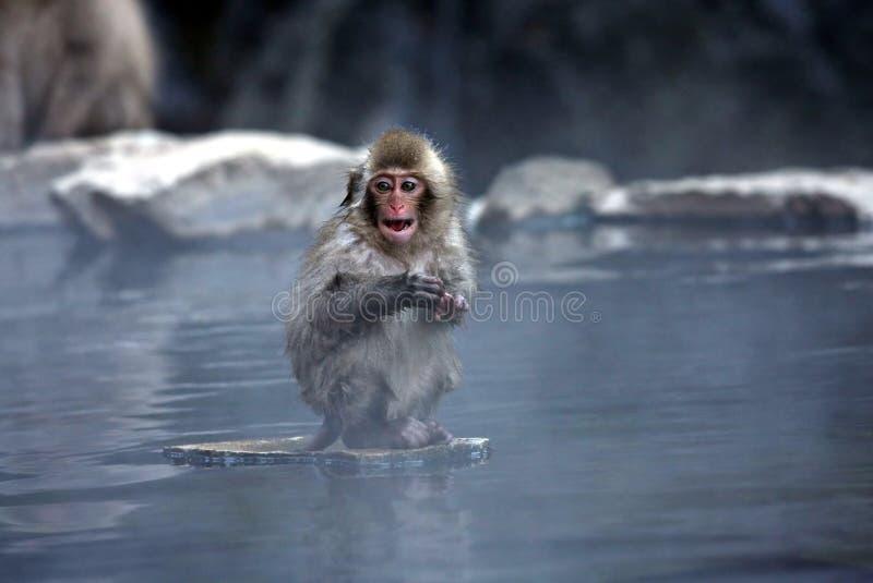 Snow Monkey. At Jigokudani near Nagano, Japan stock photo