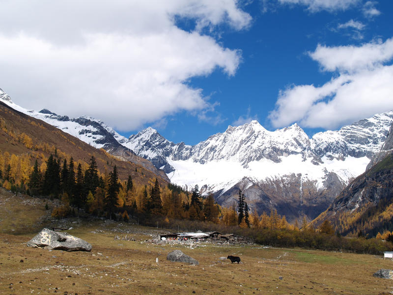 Snow Mountain - Shuang Qiao Valley Royalty Free Stock Images