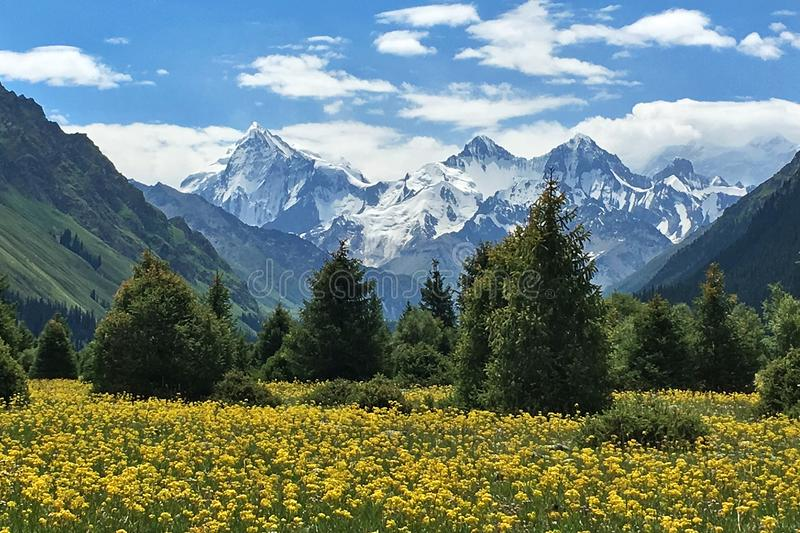 Snow Mountains Green Trees Yellow Flowers stock image