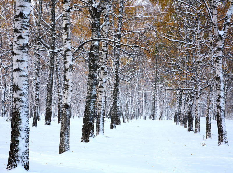 Snow in october stock photography