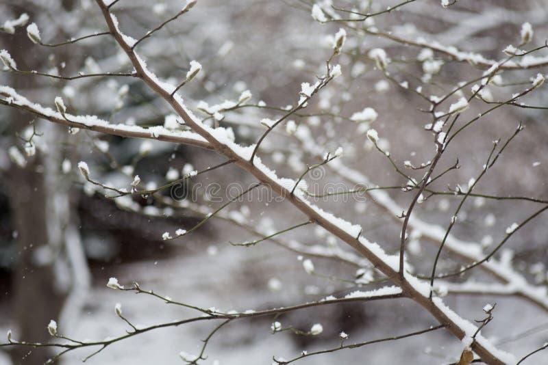 Snow på en förgrena sig royaltyfria foton