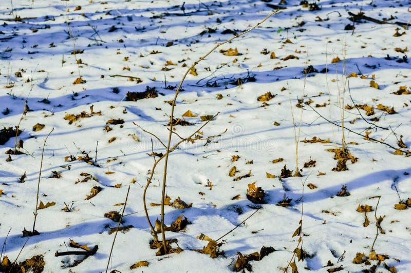 Snow på slipat fotografering för bildbyråer