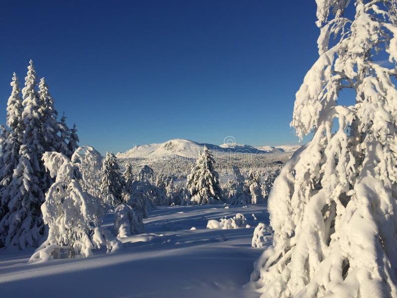 Snow paradis. Beateful day in mountain in Norway. -20 celcius stock image