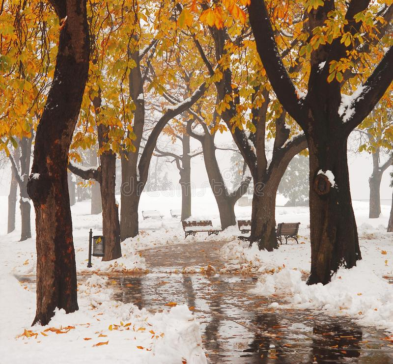 Snow at the park royalty free stock image