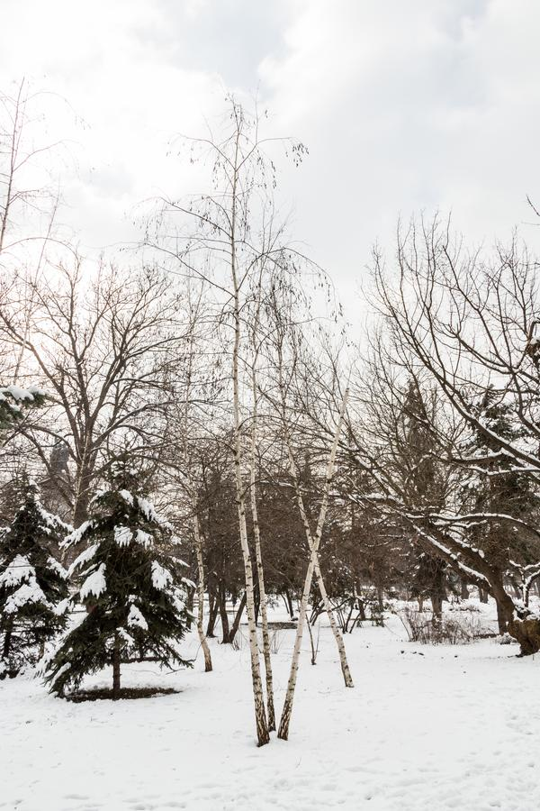 Snow in the Park. Sofia/Bulgaria - February 11, 2015: In a park in central Sofia Bulgaria stand trees, their limbs white from the previous night`s snow storm stock photos