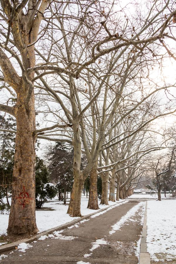 Snow in the Park. Sofia/Bulgaria - February 11, 2015: In a park in central Sofia Bulgaria stand trees, their limbs white from the previous night`s snow storm stock photo