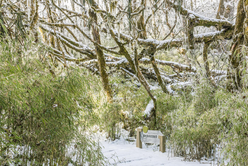 Snow path royalty free stock photography