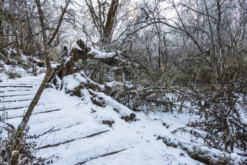 Snow path stock photography