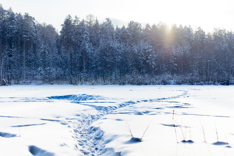Snow path to forest royalty free stock photos