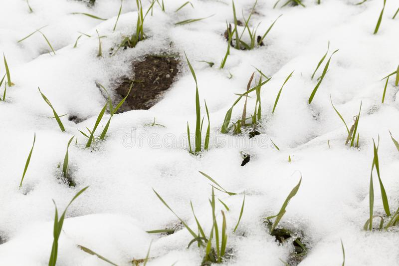 Snow drifts in winter stock image