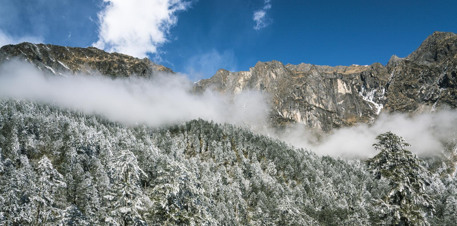 Snow pine and fog royalty free stock photography