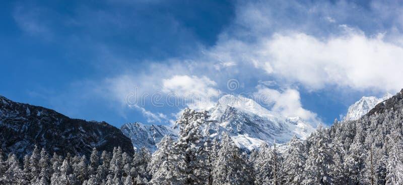 Snow pine and Gongga snow mountain stock photos