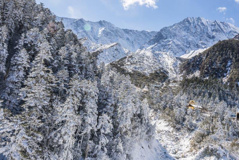 Snow pine stock image