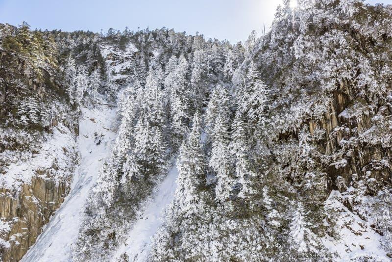 Snow pine stock images