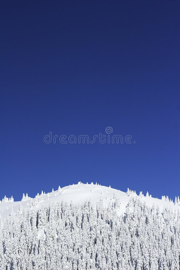 Snow pine trees on mountain royalty free stock images