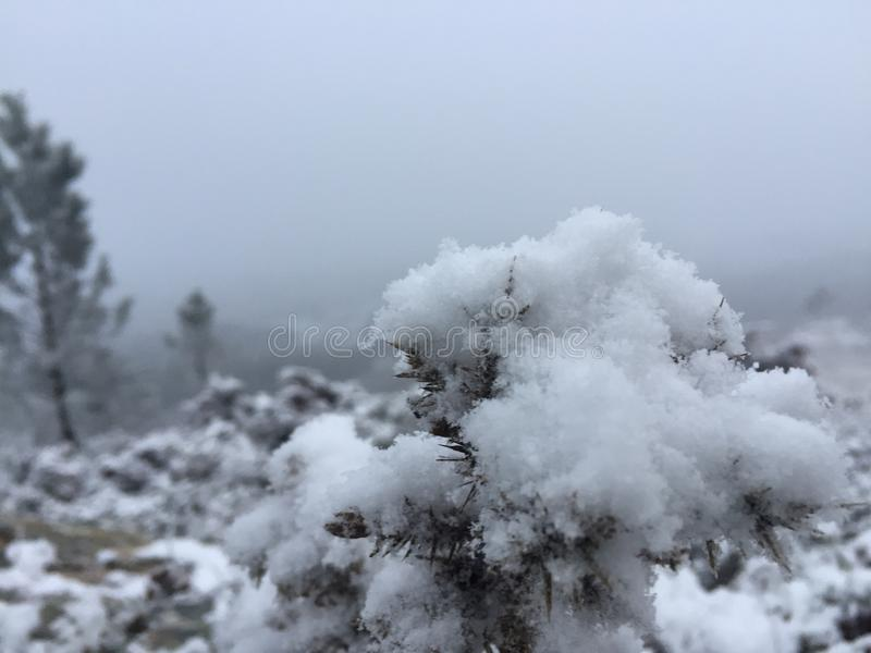 Snow. royalty free stock photography