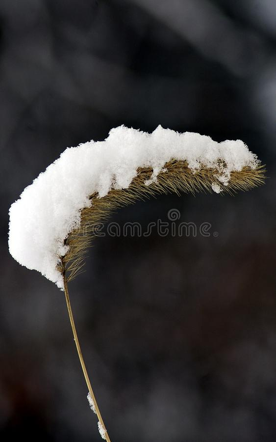 Download Snow on a pod stock image. Image of snowfall, outdoors - 7851487