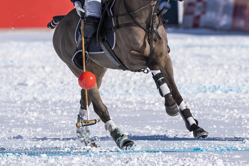Snow polo. A detail of the snow polo sport royalty free stock image