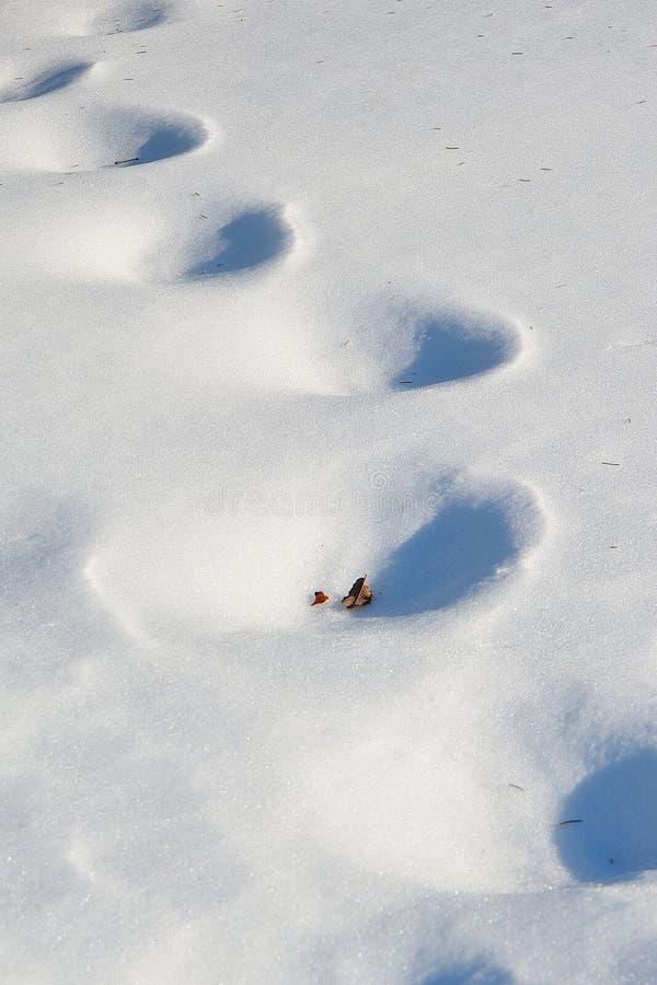 Snow Prints stock photography
