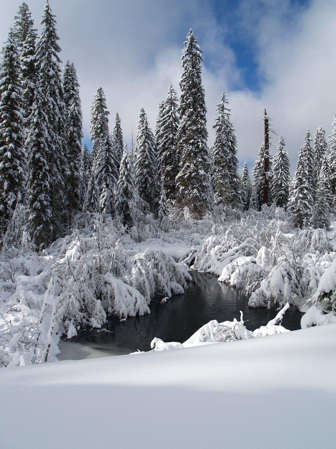 Snow räknat Trees, liten vik och damm royaltyfria foton