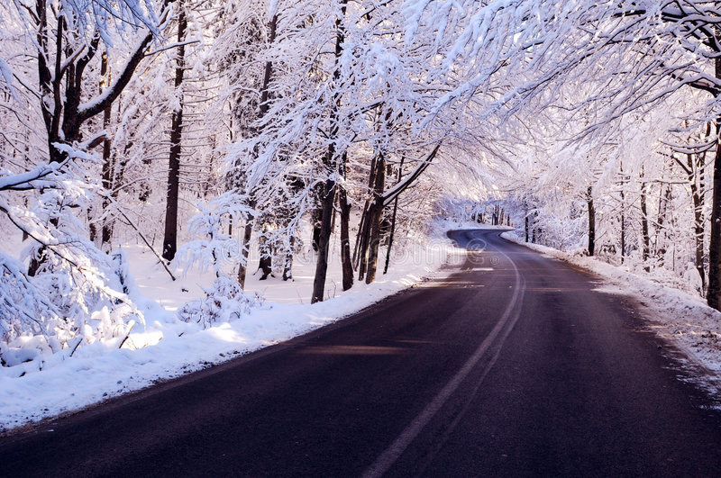Snow road. Snow covered trees lining rural road receding into distance in winter stock images
