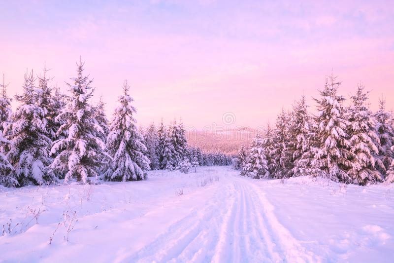The snow road through the alpine forest royalty free stock images