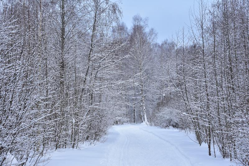 Snow road ski track through the cold winter forest. beautiful nature, winter, covered with snow stock photo