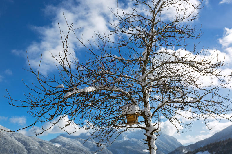 Snow on roof of wooden bird feeder hanging on tree branches during winter in Austria, Europe. Snow on roof of wooden bird feeder hanging on leafless tree royalty free stock images