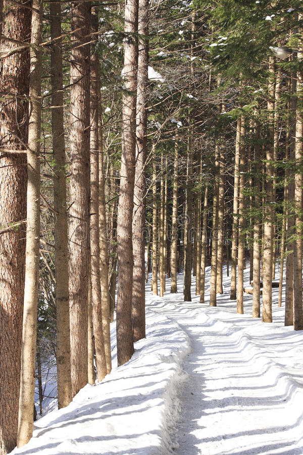 Download Snow-Scape stock photo. Image of snow, forest, landscape - 13275364