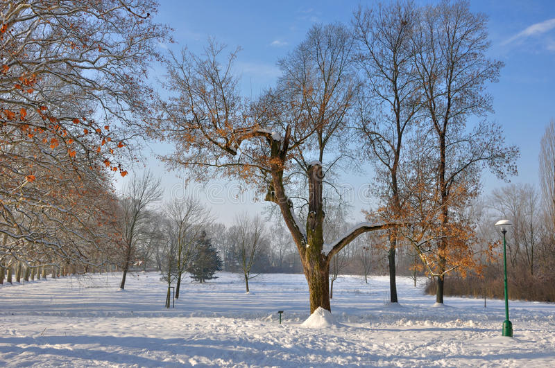 Snow scene royalty free stock images