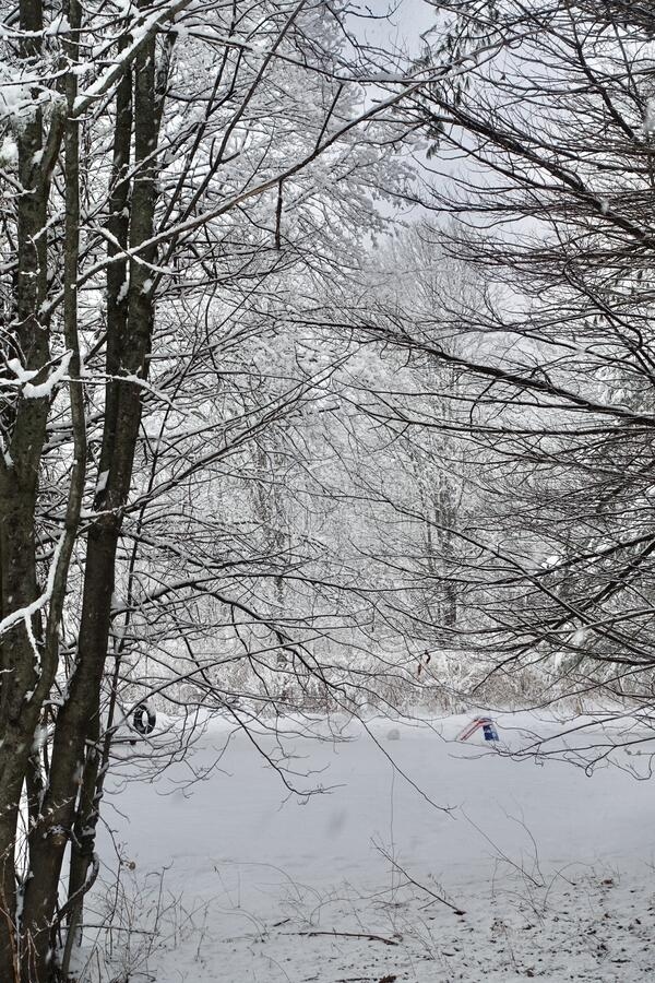 Snow scene thick with tree branches and a suburban yard with tire swing and play toy. Tree branches of two deciduous trees intertwining as snow falls around them stock image