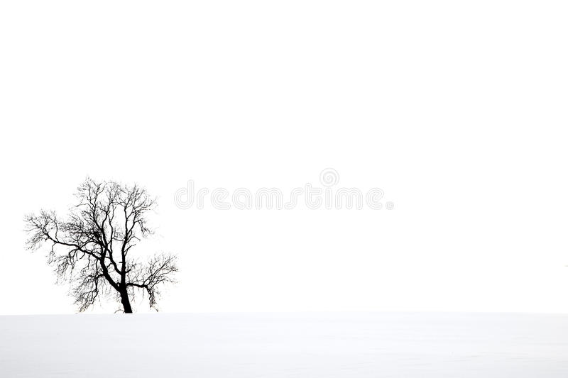 Snow scene and tree. Lone tree silhouetted against winter snow and sky. Copy space , horizontal layout stock photo